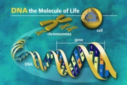 dna-pictures1