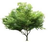FreeGreatPicture.com-568-tree