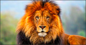 Lion 2015-09-06 at 23.50.17